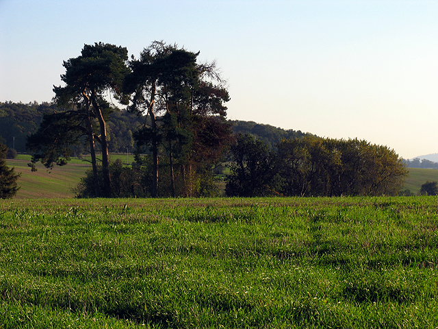 Trees on Farmland at Winterbourne