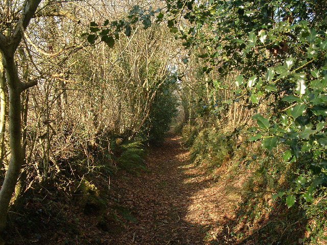 Tarka Trail near Brightley Farm
