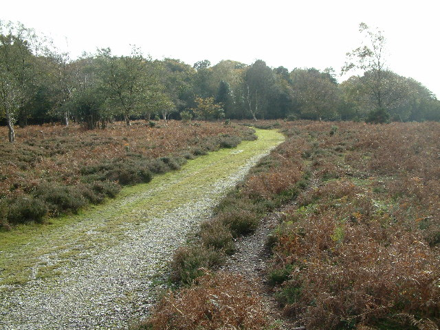 Ridley Wood, New Forest