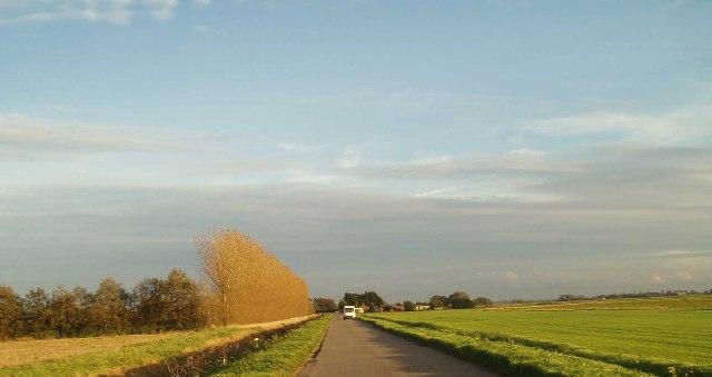 Poplars on School Road.