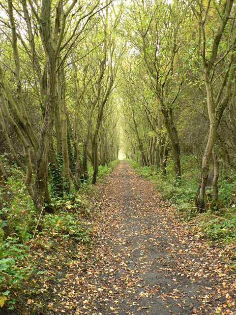 Cycle path between Robin Hood's Bay and Ravenscar