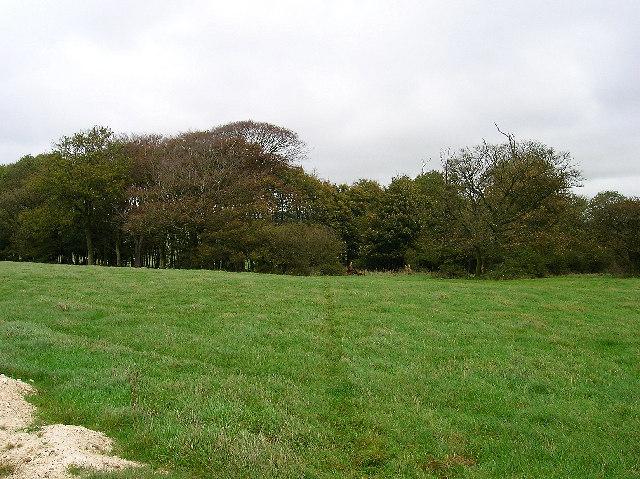 Piddingworth Plantation