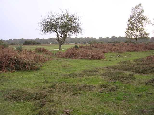 Black Knowl heath, New Forest