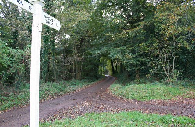 Broadclyst: woods near Whidown