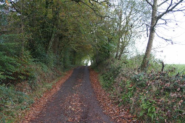 Bradninch: lane by White Down Copse