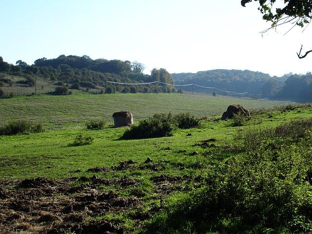 Rough Pasture near Cockhill Farm