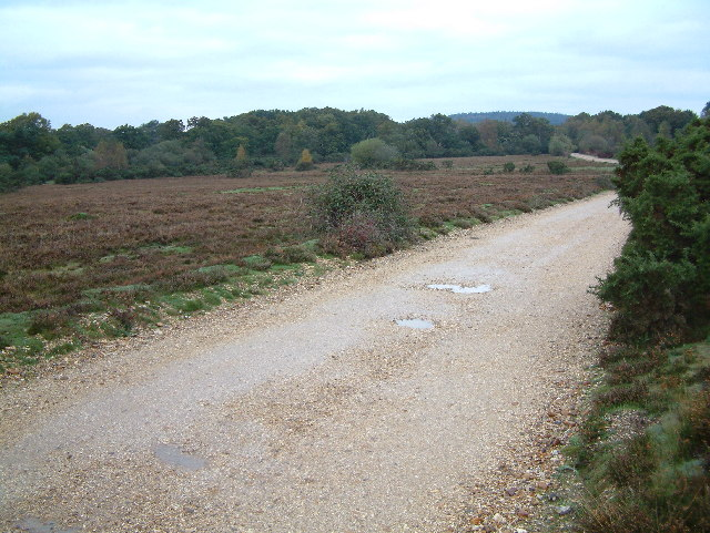 Black Heath, New Forest