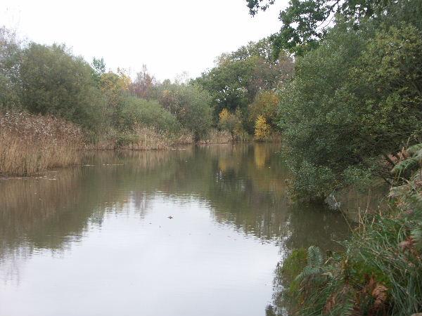 Mopley Pond, Hants