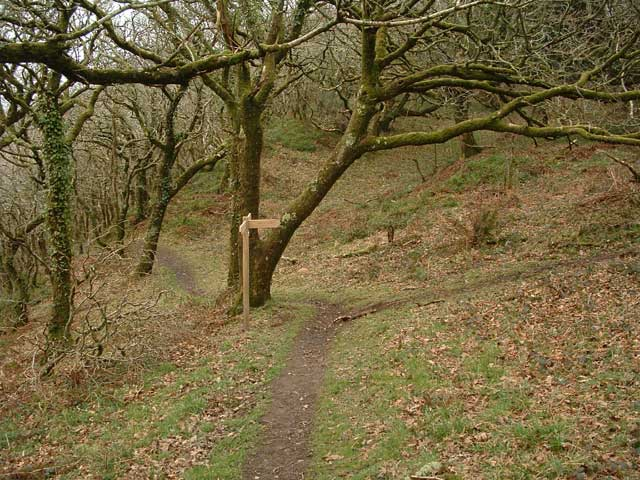 Worthygate Wood