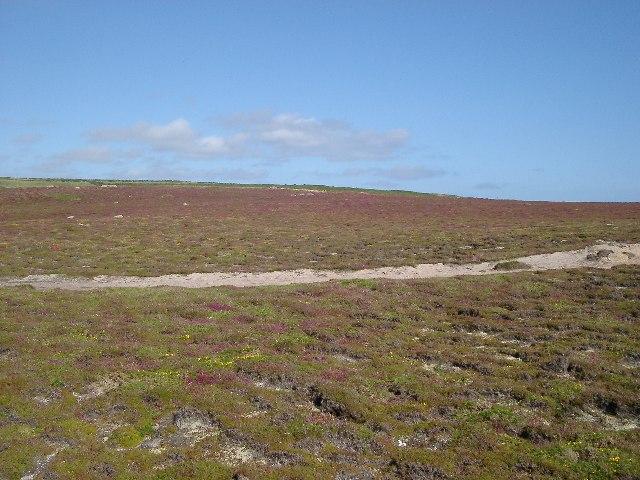 Maritime Heath