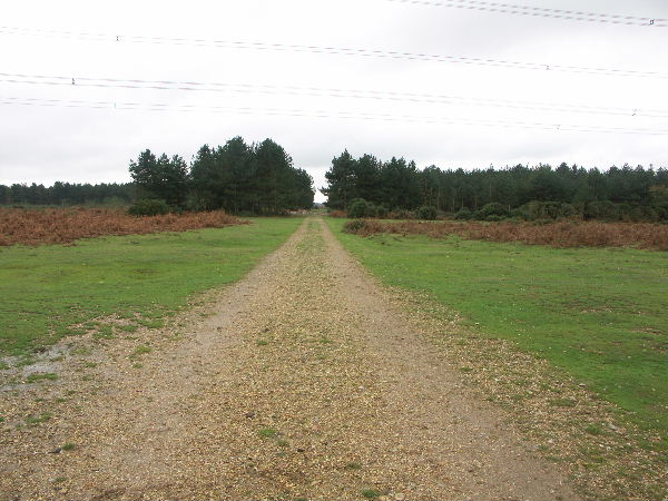 Fawley Inclosure, New Forest National Park, Hants