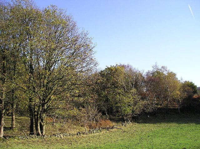 Woodland in October Sunshine