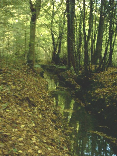 Stream in Bromley Green Woods