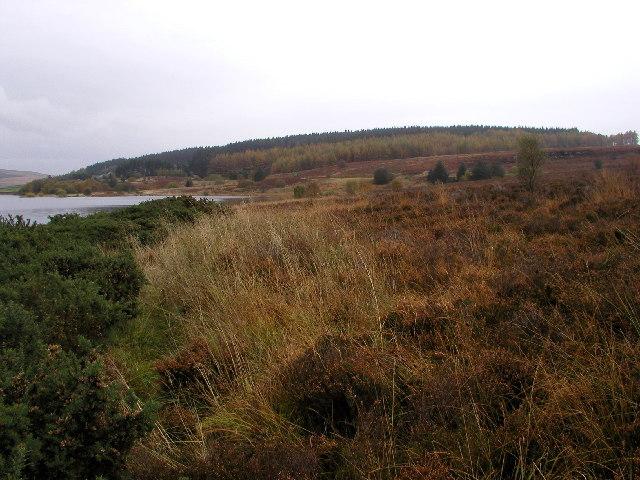 Near Kielder Water