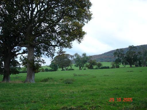 Pastureland at Kinmel