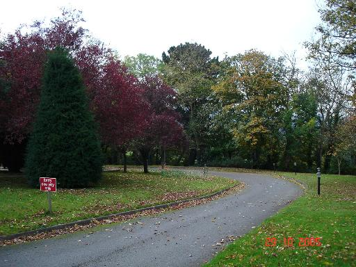 Autumn trees in Colwyn