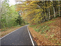 SH9722 : Autumn Splendour by John Haynes