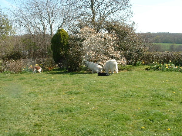 Garden, Near Horam, E Sussex