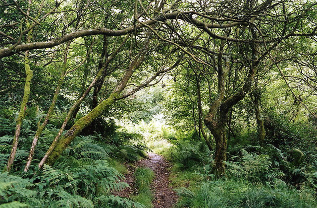 Exmoor: Ashcombe Plantation, Simonsbath
