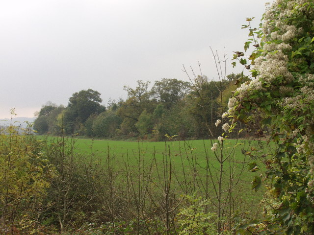 Top edge of Darland Wood