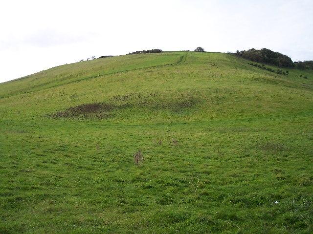 Gallibury Fields from Fern Bottom