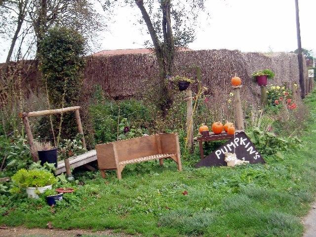 Pumpkins for sale, Barroway Drove.