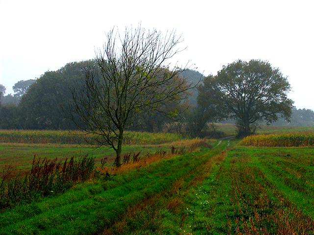 Autumnal Rainy Day near Burghclere