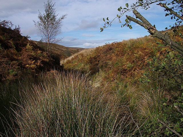 Valley in Westerdale Moor