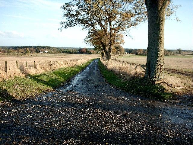 Country road near Tayport