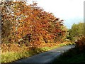 NM8903 : Autumn glory on the B840 at Loch Awe, Argyll by Patrick Mackie