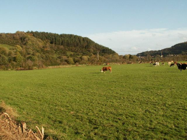 Pasture, Ystwyth valley