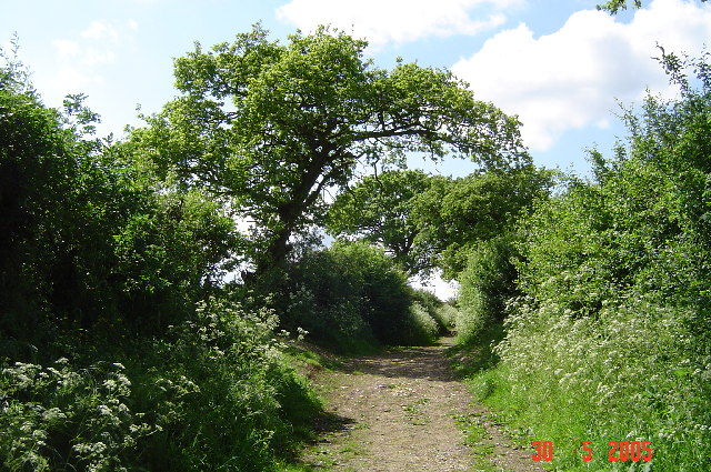 The Icknield Way in Spring