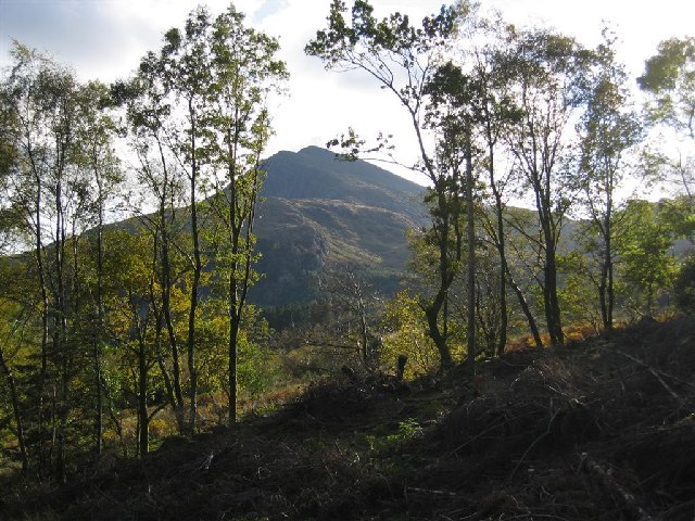 Moel Hebog from Beddgelert Forest