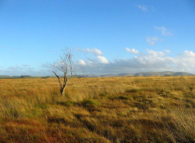 Hare Moss.