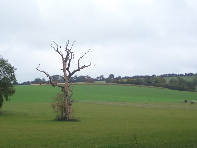 Dead tree in field past Lower Peake Cottage