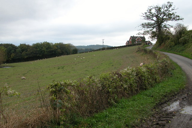 Country lane at the southern end of Marcle Hill