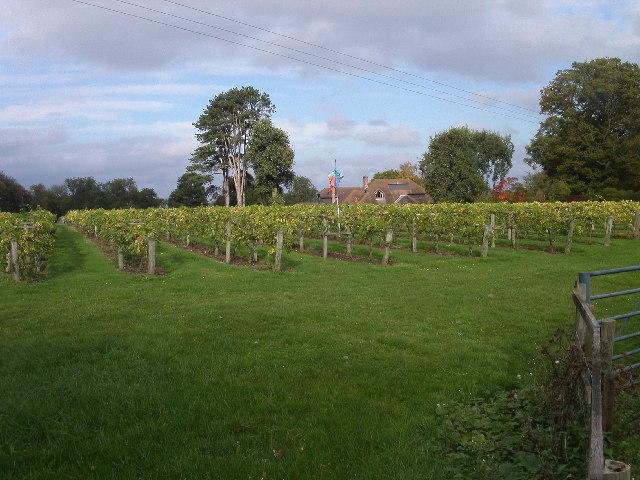 Brightwell Vineyard, Wallingford