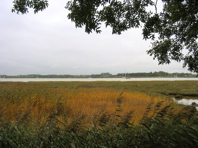 Reed beds, River Deben, Suffolk