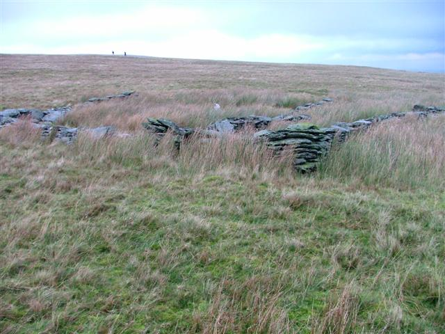 Ruined sheepfold above Sealholme Grain