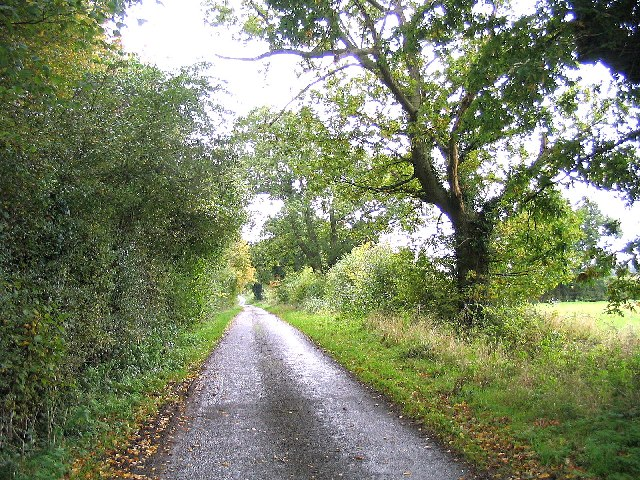 A quiet Suffolk Lane  near Bruisyard