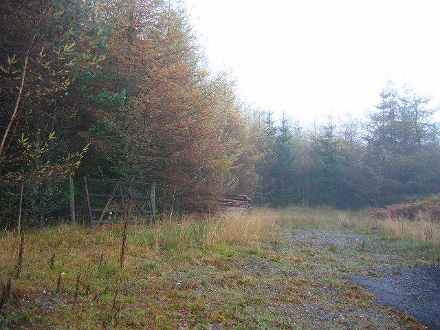 Blairuachdar Wood