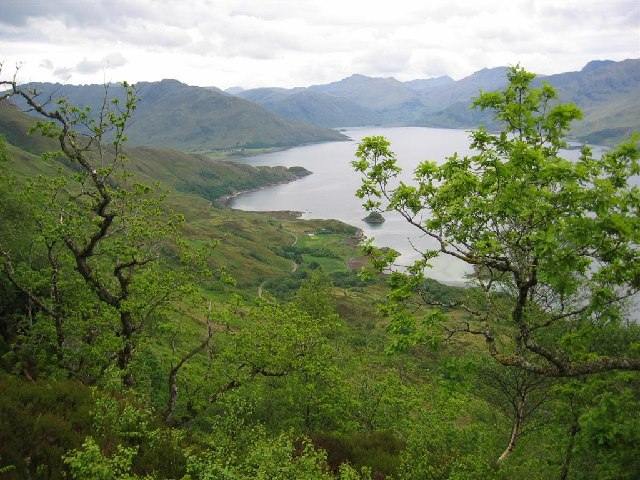 Oak and Birch Woods above Loch Hourn