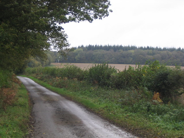 Webb's Copse near Ellisfield in Hampshire