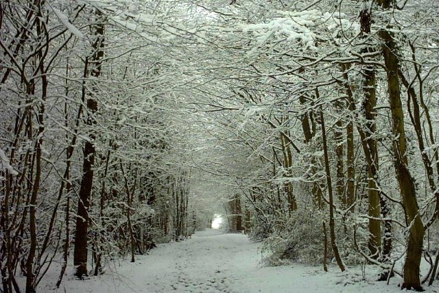 Hamstreet Woods in Snow