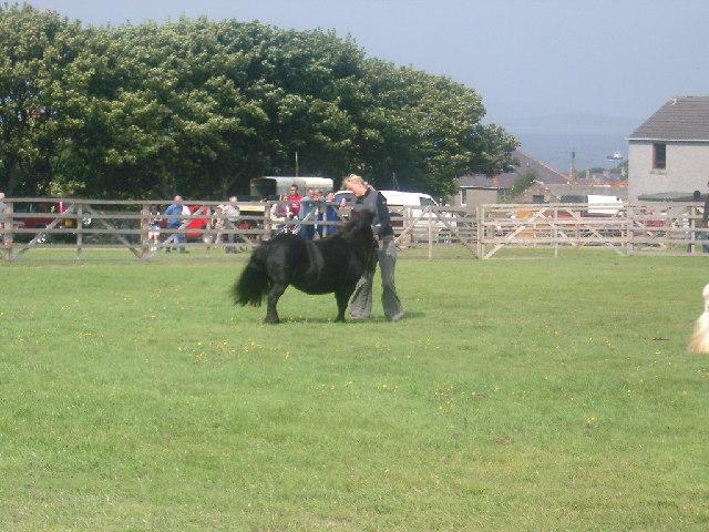 Bignold Park, Kirkwall - County Show day