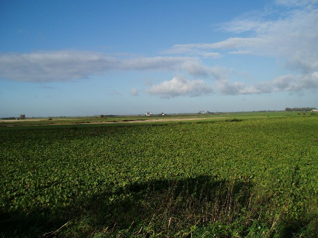West of Stowbridge; sugar beet crop