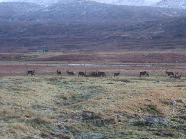 Deer near Melgarve