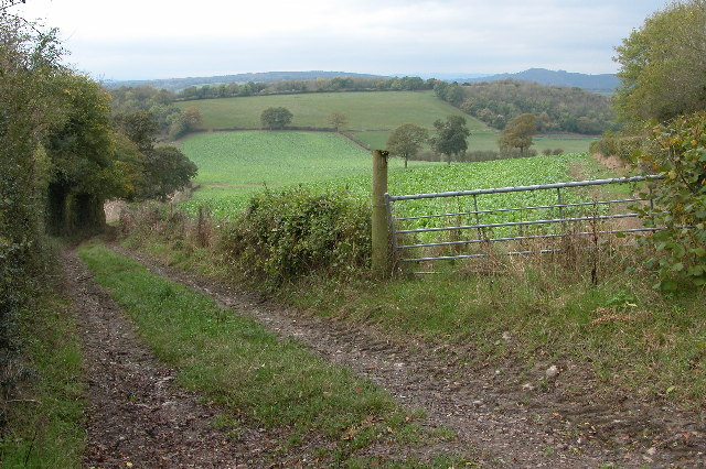 Track and bridleway on Marcle Hill
