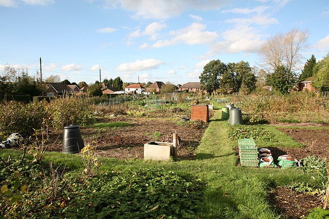 Allotments off Hill Lane, Colden Common