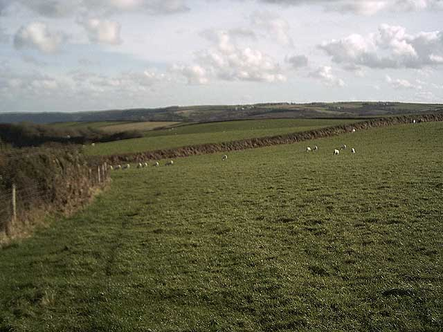 Field above Brownsham Cliffs